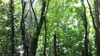 林地開発許可
